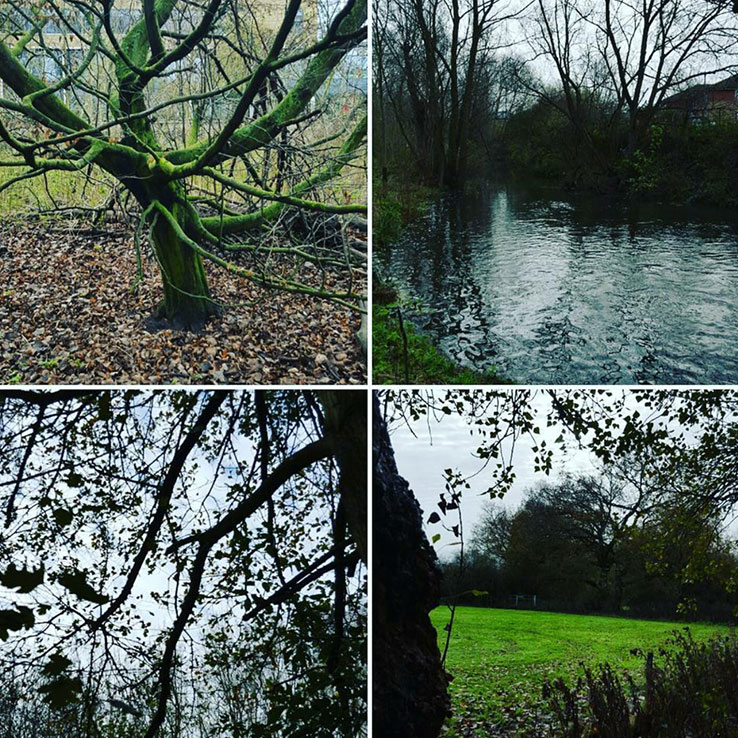 A compilation of four photos: A tree in autumn, a river, a view of branches, a view of a park