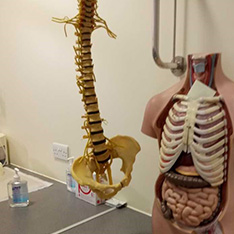 Anatomy model for student nurses