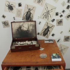Illustrations of beetles around an open briefcase on a wooden set of drawers