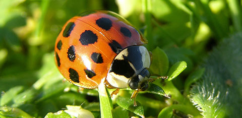 A ladybird on a leaf