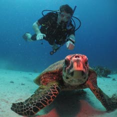 A scuba diver with a sea turtle