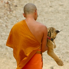 Monk carrying a tiger