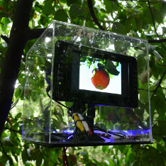 A computer monitor in a tree showing an image of an apple