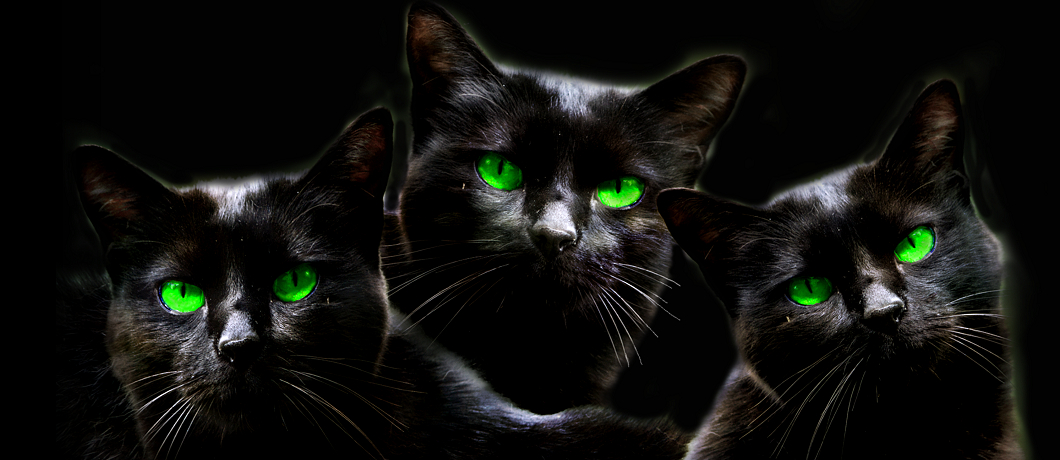 Three black cats with green eyes