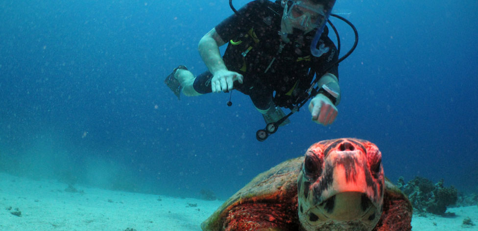 Student (and turtle) on a diving field trip