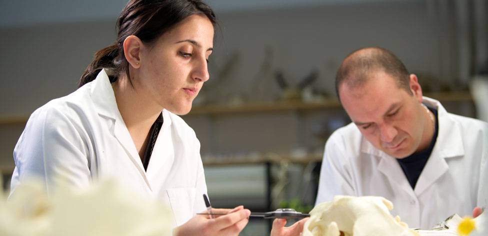 Analysing animal skulls in our labs