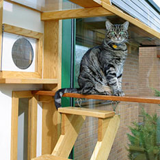 A cat sitting on a high platform in a cattery environment